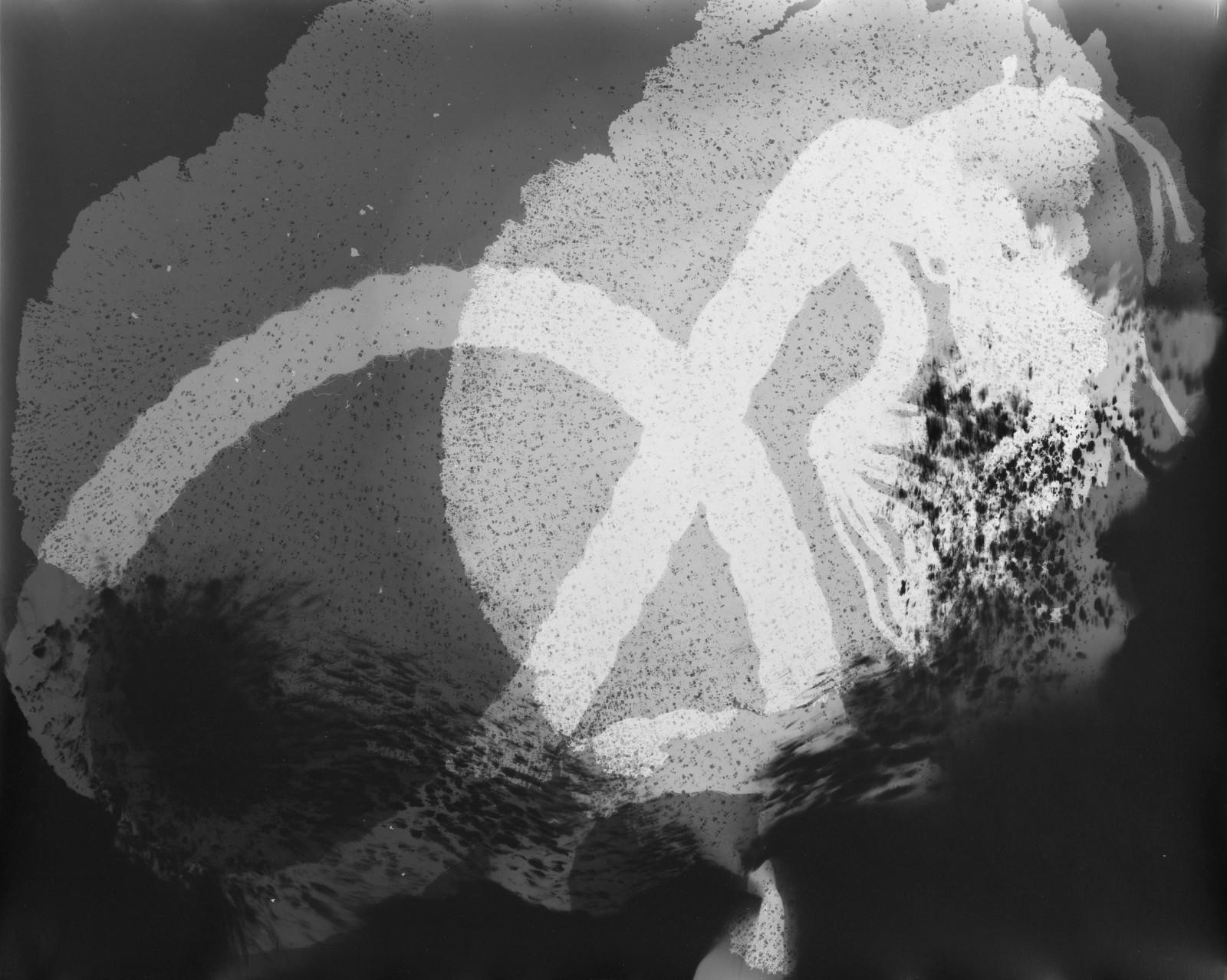 Kim Nekarda: tête, 2012, photogram on baryta paper, 40 x 53 cm